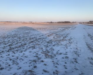 80 +/- acres in O'Brien Co @ Auction – $6,500 per acre