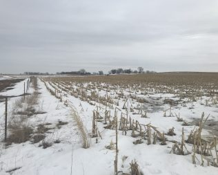 164.84 acres in O'Brien Co @ Auction T1: $6900 / T2: $6500 / T3: $3950 p/a