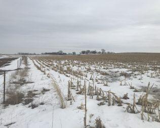 164.84 acres in O'Brien Co @ Auction T1: $6900 / T2: $6500 / T3: $3950 p/a